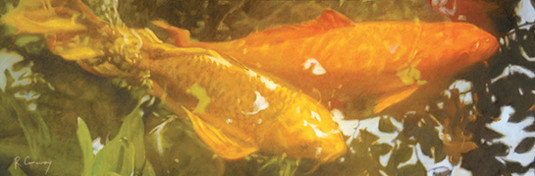 orange koi fish swimming in garden pond