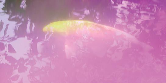 purple-fish-koi-artwork-magenta