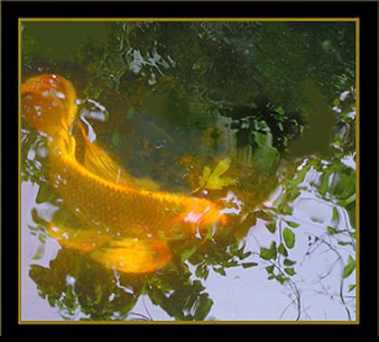 butterfly-koi-fish-painting-photoshop